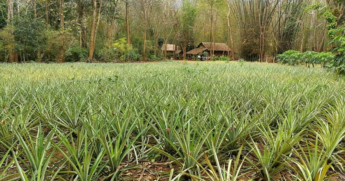 Thailand Is Pushing For The Development Of Bioeconomy