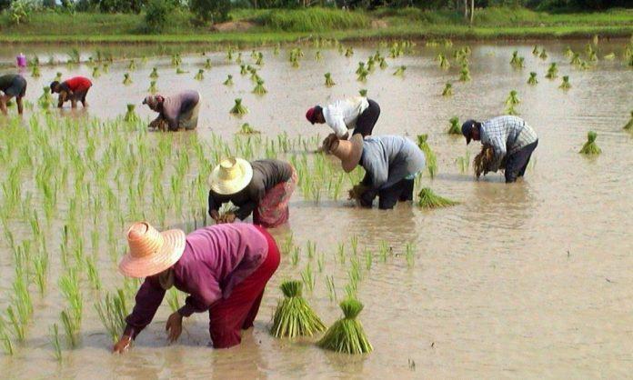 Seven million Thai farmers receive 5000-baht subsidies